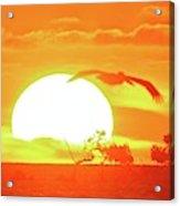Sunset At Elizabeth Bay Acrylic Print