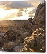 Sunset At Joshua Tree National Park Acrylic Print