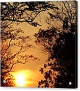 Sunset At Jungle Acrylic Print
