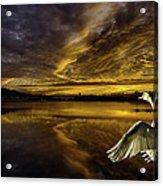 Sunset At Swan Lake  Acrylic Print