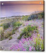 Sunset At The Beach  Flowers On The Sand Acrylic Print