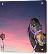 Sunset At The Farm Acrylic Print