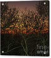 Sunset At The Presidio   Acrylic Print
