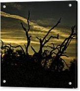 Sunset Avalon Beach Acrylic Print
