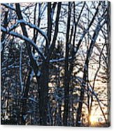 Sunset Behind The Trees Acrylic Print