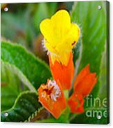 Sunset Bells Flower Acrylic Print