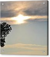 Sunset By Tree Acrylic Print