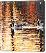 Sunset Cruise Acrylic Print by Scott Pellegrin