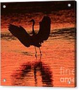 Sunset Dancer Acrylic Print