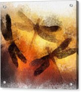 Sunset Dragonflies Acrylic Print