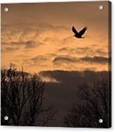 Sunset Eagle Acrylic Print