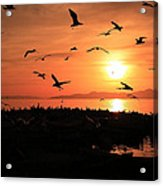 Sunset Flights Acrylic Print