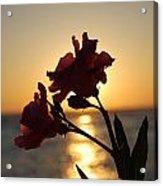 Sunset Flower 2 Acrylic Print
