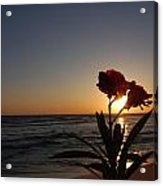 Sunset Flower 3 Acrylic Print