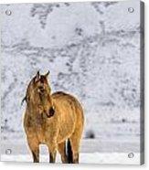 Sunset Horse In Montana Acrylic Print