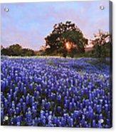 Sunset In Bluebonnet Field Acrylic Print