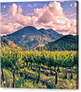 Sunset In Napa Valley Acrylic Print