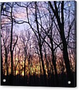 Sunset In The Forest Acrylic Print