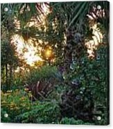 Sunset In The Garden Acrylic Print