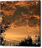 Sunset In The Orchard Acrylic Print by Cari Gesch
