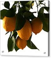 Sunset Lemons Acrylic Print