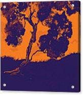 Sunset Madrone Acrylic Print