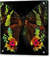 Sunset Moth Acrylic Print