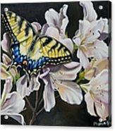 Sunset On A Swallowtail Acrylic Print