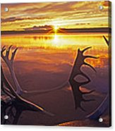 Sunset On Caribou Antlers In Whitefish Lake Acrylic Print