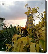 Sunset On Leaves Acrylic Print