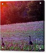 Sunset On Mallards Acrylic Print