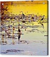 Sunset On Parry's Lagoon Acrylic Print