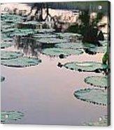 Sunset On Pond Lily Pads Acrylic Print