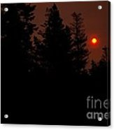 Sunset On The Pines Acrylic Print