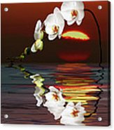 Sunset Orchids Acrylic Print