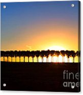 Sunset Over Tree Lined Road Acrylic Print