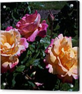 Sunset Painted In Roses Acrylic Print
