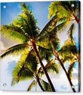 Sunset Palm Trees Acrylic Print