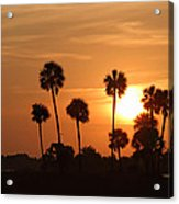 Sunset Palms 1 Acrylic Print by Roger Snyder