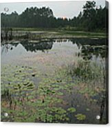Sunset Pond And Lilys Acrylic Print