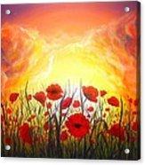 Sunset Poppies Acrylic Print
