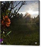 Sunset Roses Acrylic Print