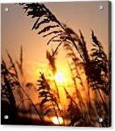Sunset Seaoats Acrylic Print