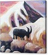 Sunset Swiss Goat Acrylic Print
