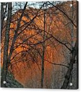 Sunset Through The Forest Acrylic Print