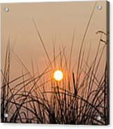 Sunset Through The Grass - Villas New Jersey Acrylic Print by Bill Cannon