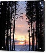 Sunset Through The Pines Acrylic Print