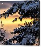 Sunset Through The Snowy Branches Acrylic Print