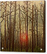 Sunset Thru The Pine Barrens Acrylic Print