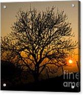 Sunset Tree Acrylic Print by Anne Gilbert